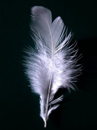 200px-a_single_white_feather_closeup.jpg