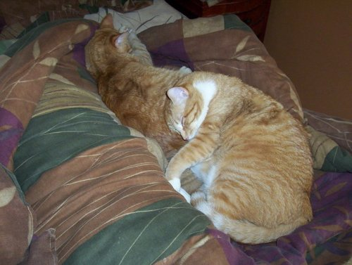 cats-asleep.jpg
