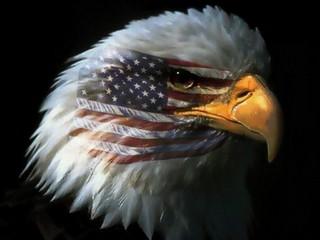 eaglewflag1.jpg