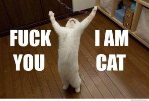 Cat F you